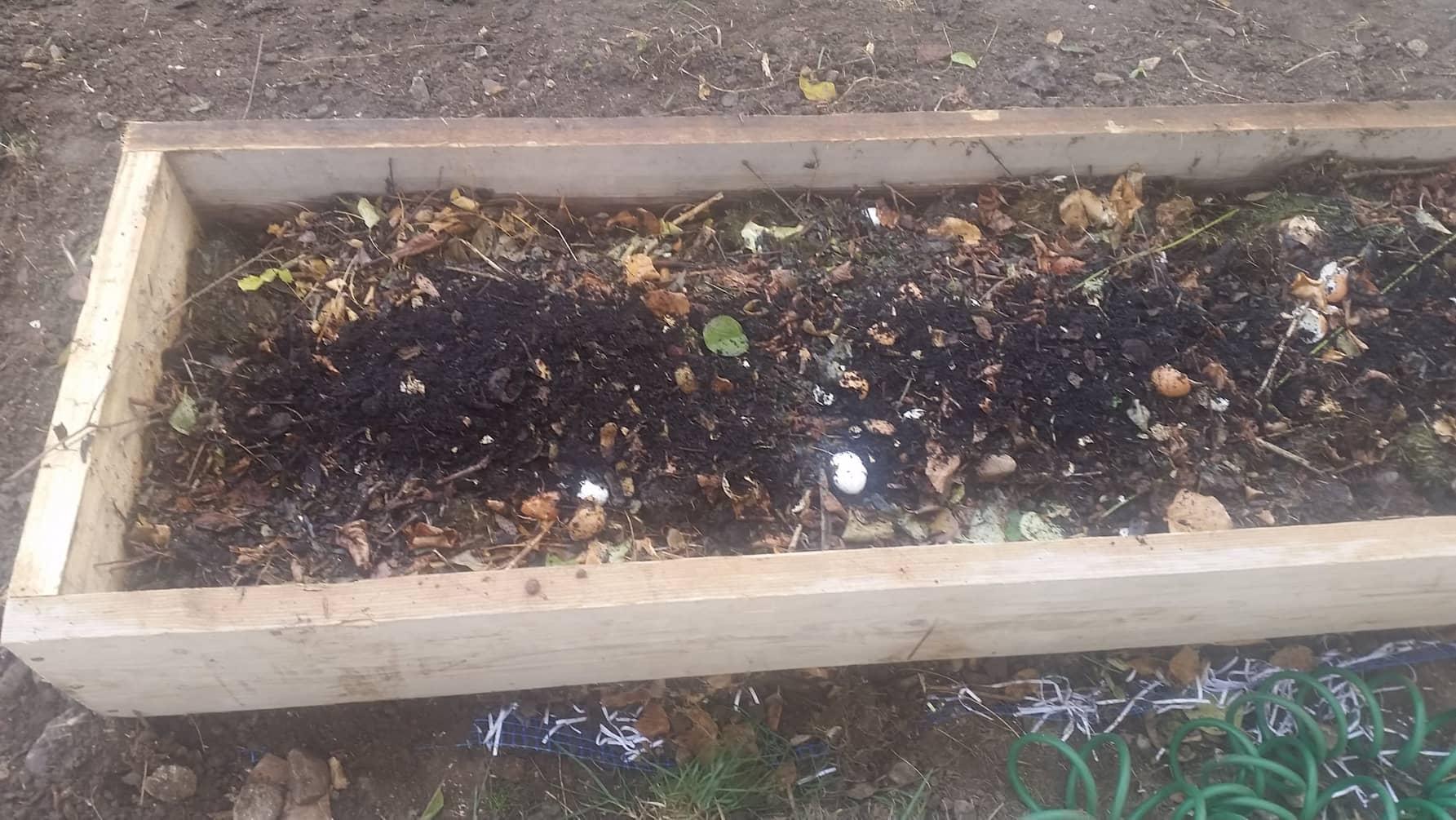 Kompost w grządce