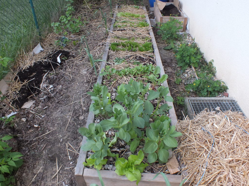 Ogródek w kwietniu