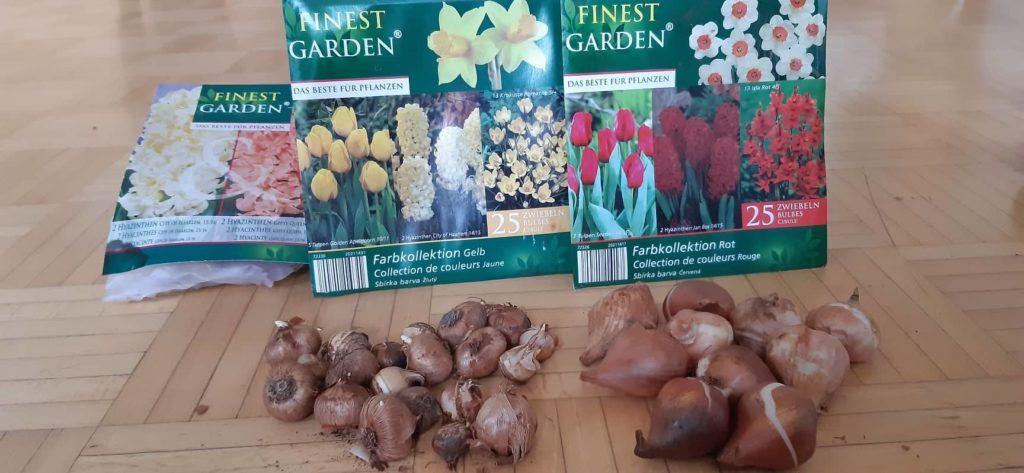 Kalendarz prac ogrodowych - wrzesień