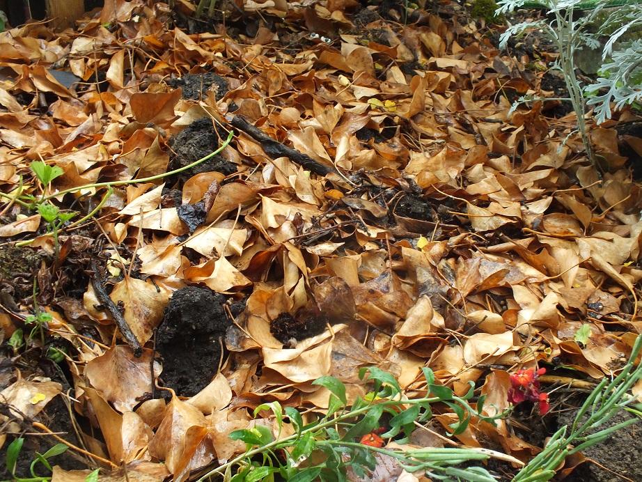 Ściółkowanie gleby liśćmi