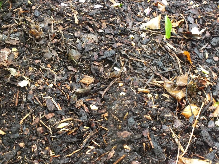 Ściółkowanie gleby korą