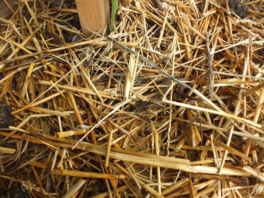 Ściółkowanie gleby słomą