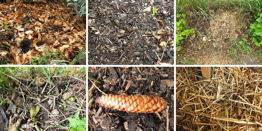 Naturalne ściółkowanie gleby